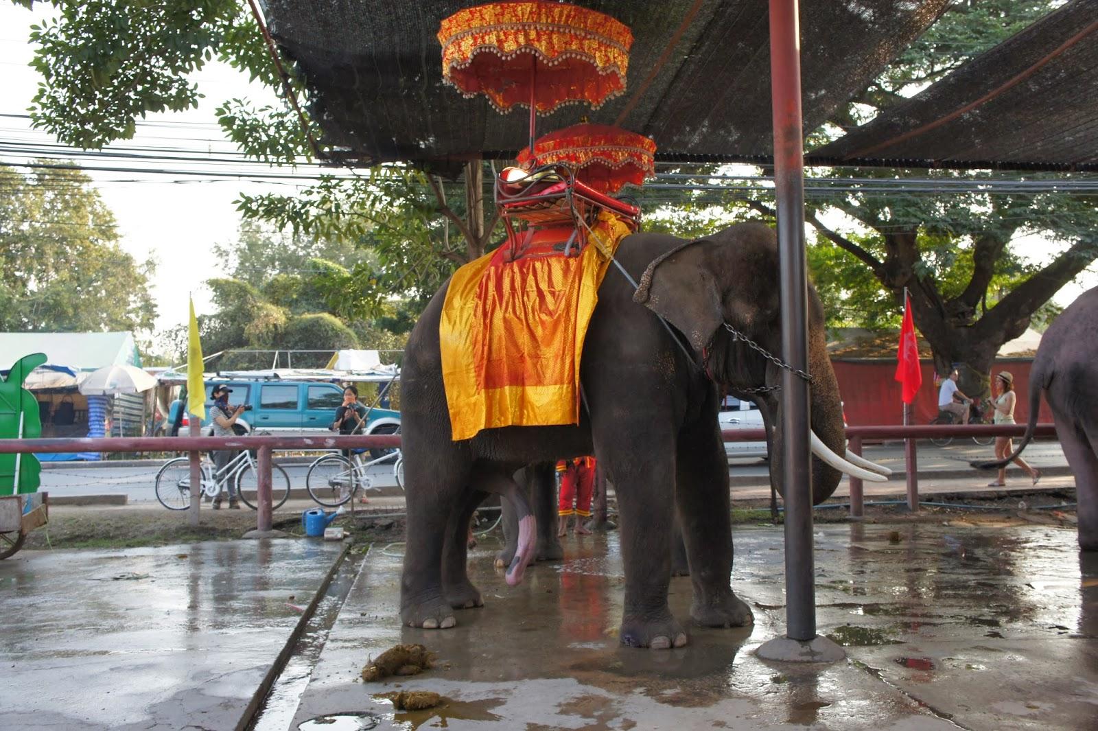 【タイ05】象のような立派なムスコさんを持ちたい!w